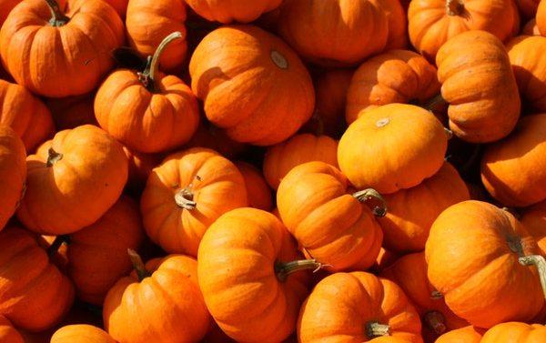 Halloween Fare - Squashes